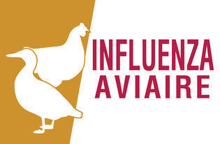 Evolution de l'influenza aviaire